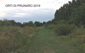 ARTICOLO orto 2019